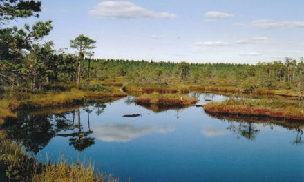 Lacs, rivières et tourbières