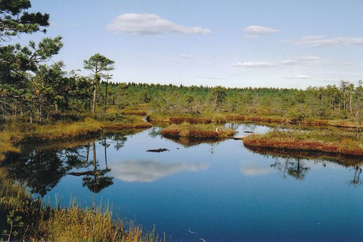 10 destinations pour découvrir la nature estonienne