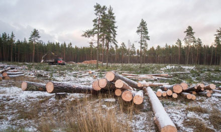 Actualités estoniennes 16-31 mars 2017