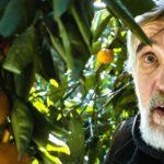 «Mandarines»: le fruit de l'espérance?